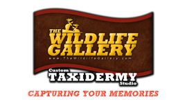 wildlife-gallery-taxidermy