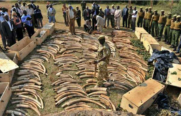 Legalising the legal trade of Rhino horn and Elephant ivory in Namibia to other countries