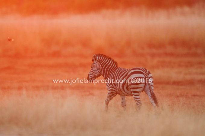 African Reflections - by John K. - an account of a photographic safari with Jofie Lamprecht