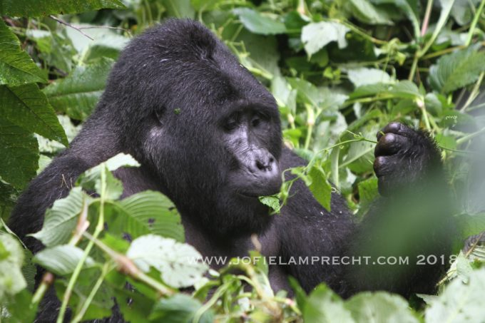 Uganda - Place of wonder, and bad roads - by Jofie Lamprecht